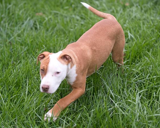 Middleburg Humane Foundation Pups 11-4-17