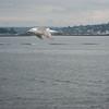 Bainbridge Island Ferry (SEA) - 8