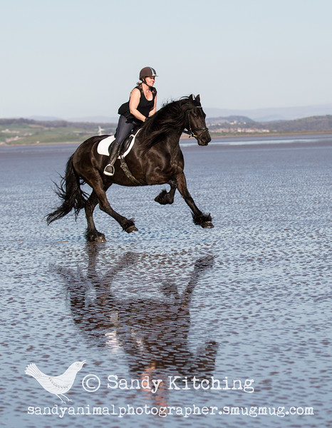 friesian Experience Susie beach ride Apr 2015