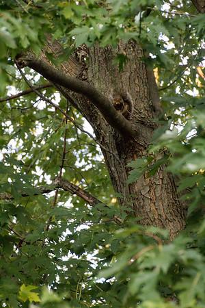 2013_1012 Squirrel