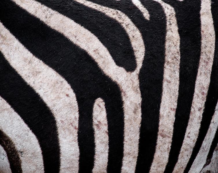 Zebra, Nogorongoro crater.  Tanzania, 2019