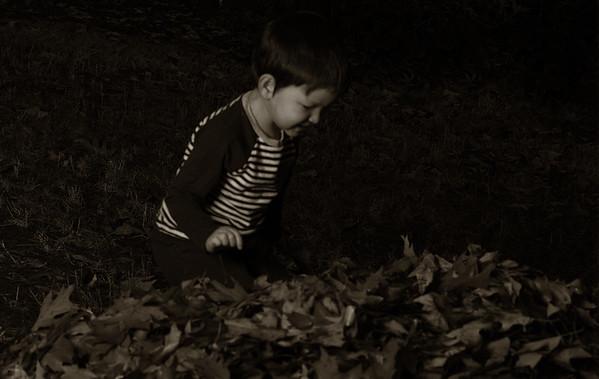 2015-10-12 Temp - fall leaves