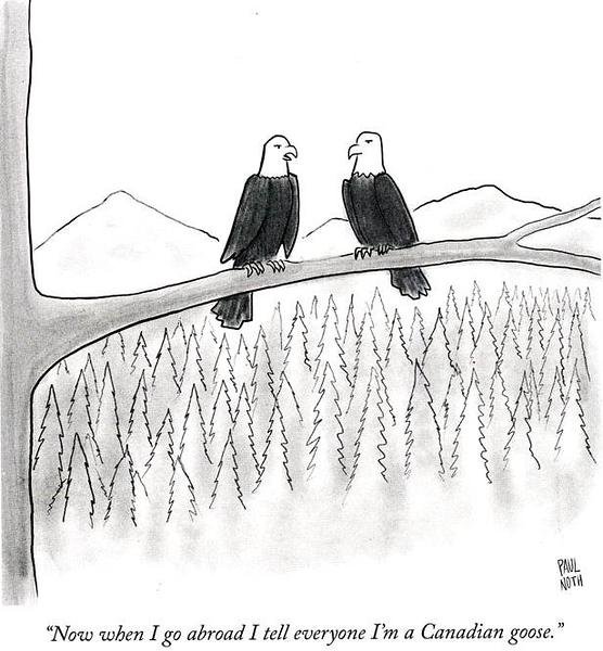 bald eagles.jpg