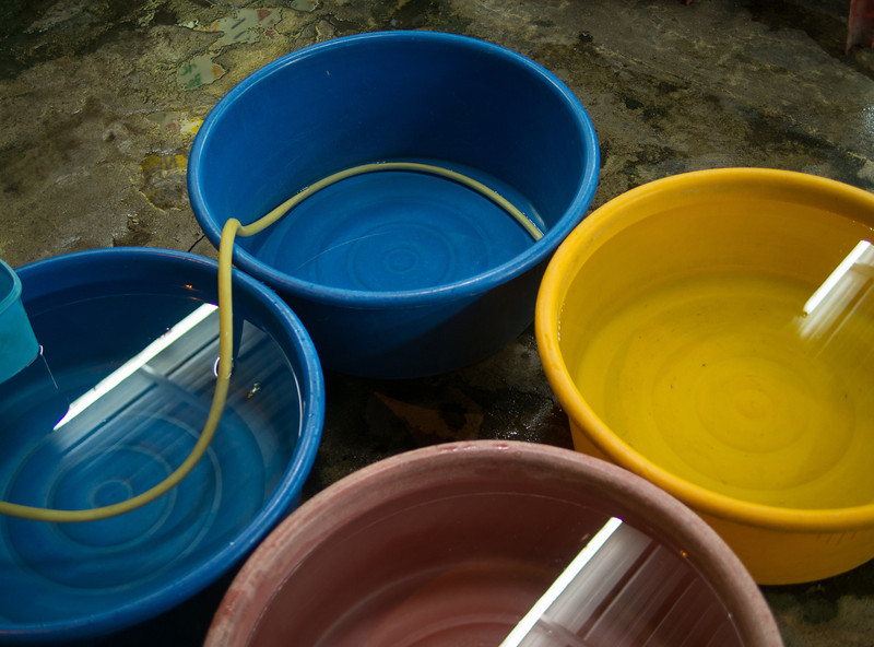 Dishwashing water
