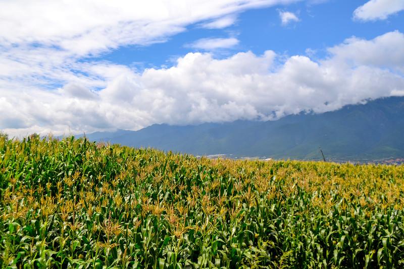 """12_Mensah_""""The Hills of Dali"""" .jpg"""