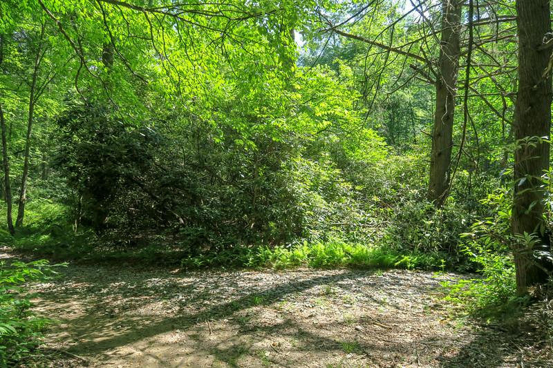 Riverside/Bradley Creek Trail North Junction (Bradley Creek Crossing #1) -- 2,340'