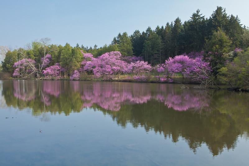 Spring12-1640.jpg