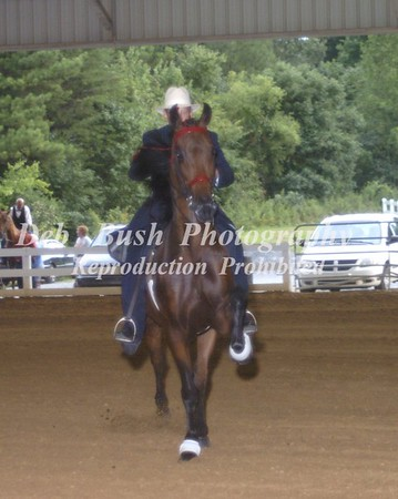 CLASS 54  SADDLEBRED OPEN RACKING