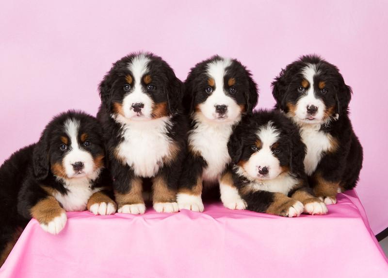 2013-Pearson Pups-Jun02-0299-3.jpg