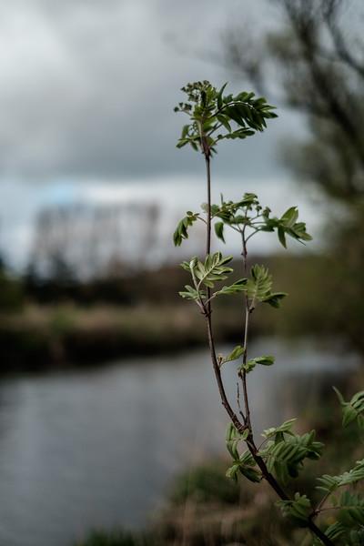 011_River_Walk.jpg
