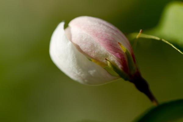 2011-04-21 flowers