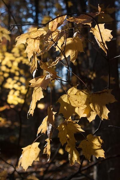 20121021-2012-10-2117-17-3913266.jpg