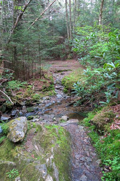 Mountains-to-Sea Trail -- 5,490'