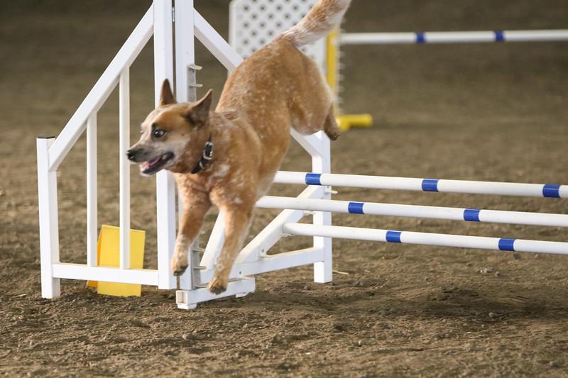 3-10-2019 Bloodhound-9120.jpg