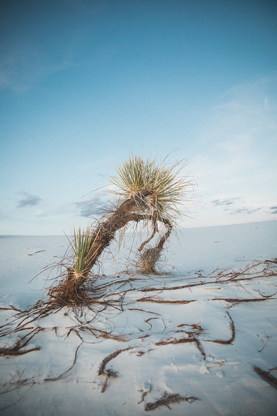 Chris Lang - White Sands - New Mexico-4855.jpg