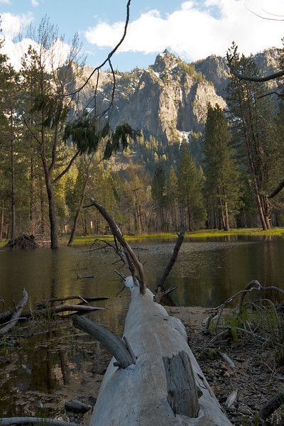 Felled Tree in Pond - Yosemite Valley