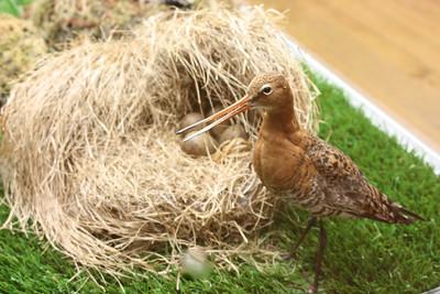 Bird Museum