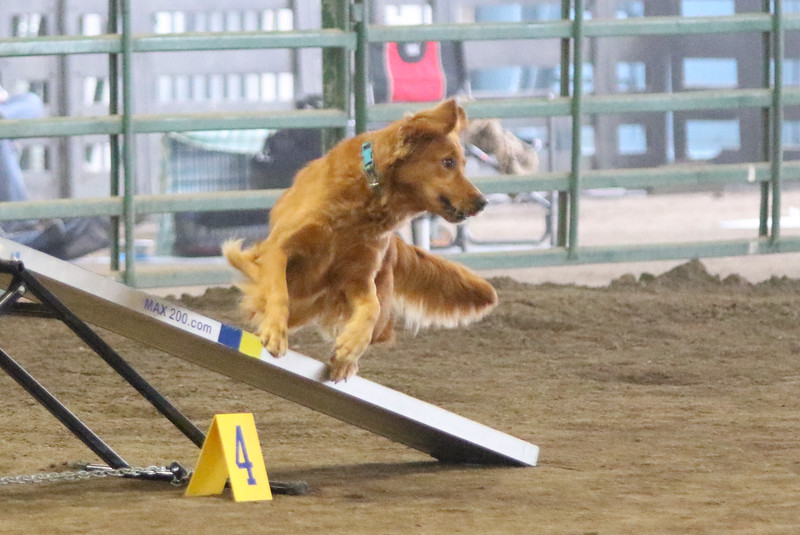 3-15-2015 Bloodhound-9820.jpg
