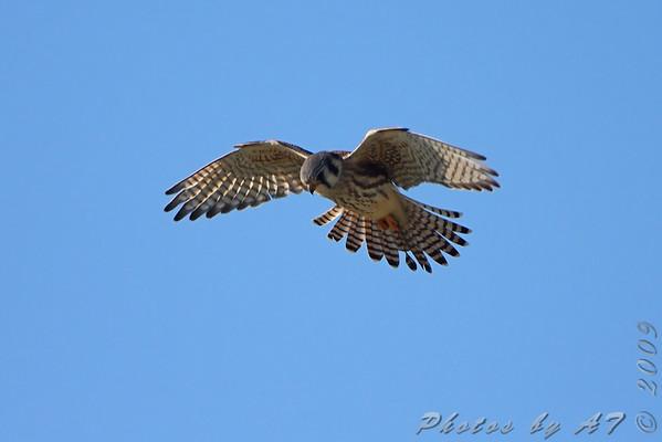 2009-12-16 Riverlands Migratory Bird Sanctuary