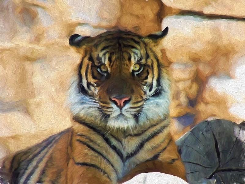 Tiger Face On_Topaz Oil LaSala.JPG