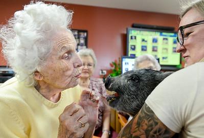 Photos: Hog Haven Farm Visits Seniors in Longmont