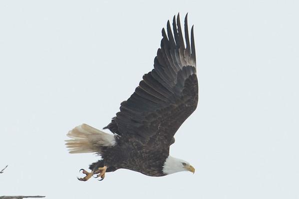 Wabash Eagles - 2.15.16