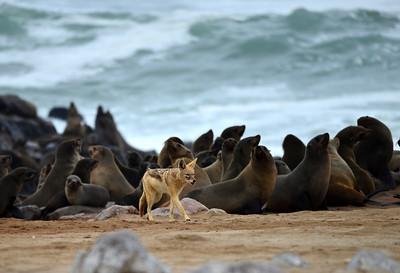 Namibia-Animals