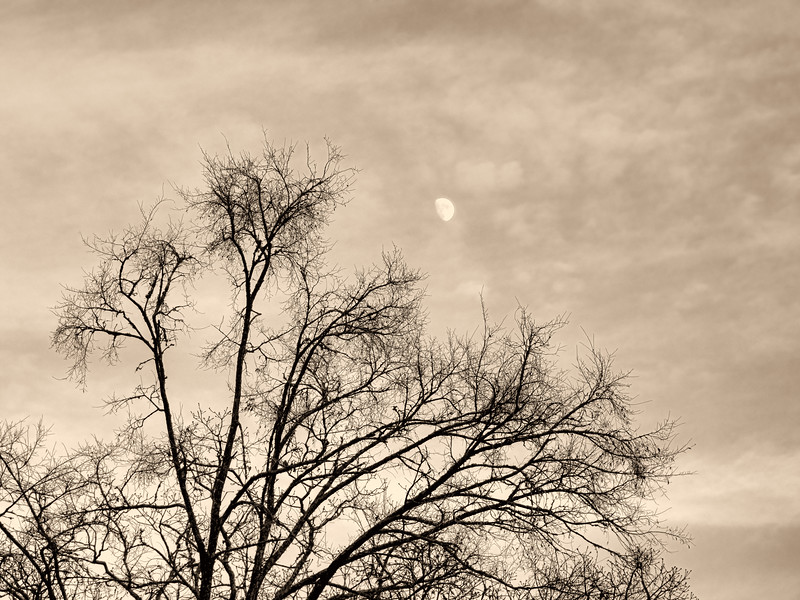 2019-12-06 Tree and Moon toned PGX91043.jpg