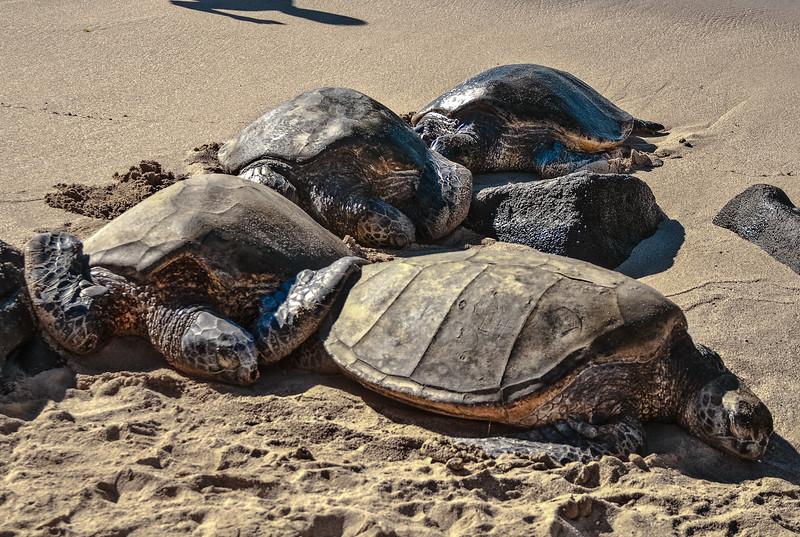 Turtle Bay Oahu-8757.jpg