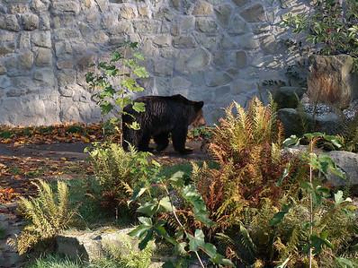 Zoo Katowice october 2014