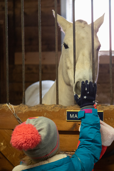 FPC_Horses and Holidays_2019_ ATC99465.jpg