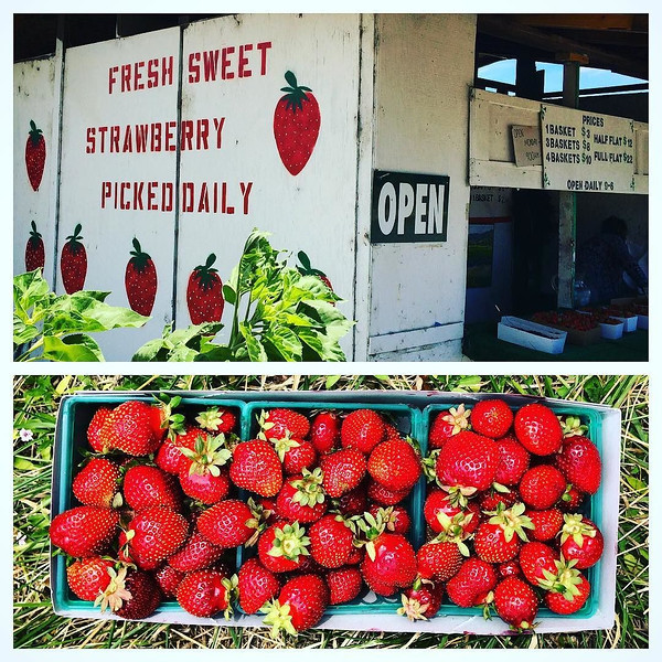 This_unassuming_little_stand_and_the__strawberry_farm_behind_it_sells_some_of_the_best_berries_in_the_world.__And_they_are_now_open_for_business___I_can_hardly_contain_my_excitement____springtime__nojoke__sonoma_by_plantfoodpoet.jpg