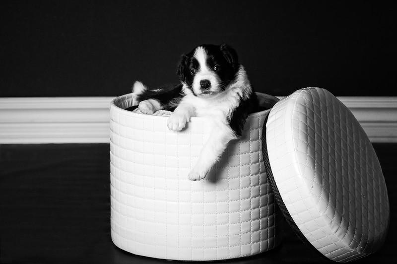 p20141109_Godiva_Zapp 4 weeks_puppy girl 4_4-3