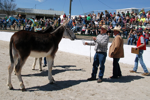 2011 Draft Mule Show
