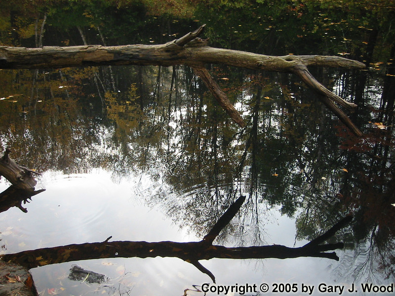 Reflected branch