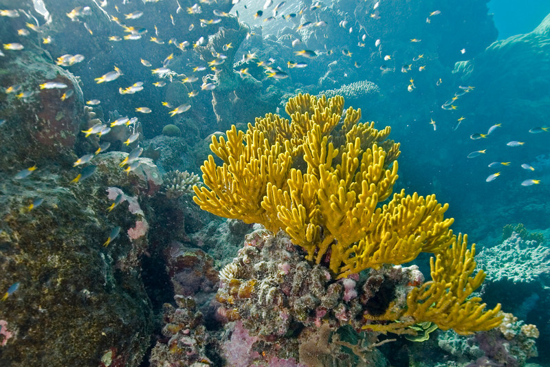 Leather Coral 5, Great Barrire Reef - Cairns, Queensland, Australia