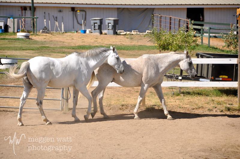 EB&Horses-094.jpg