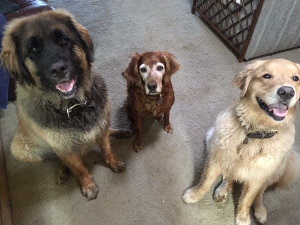 Lexi (Yellow) and friends