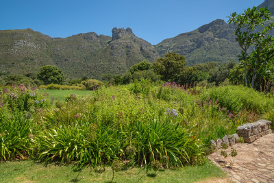 Kirstenbosch National Botanical_1986