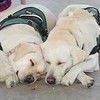 Stitch, Riley & Sophie after the VA BBQ!  All three can be seen at the Loma Linda VA hospital visiting our Vets!