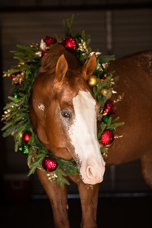 Pinky Christmas 11-18