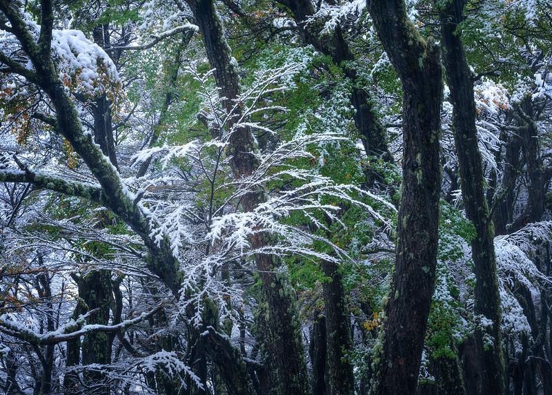 """""""Emerald Snow"""""""
