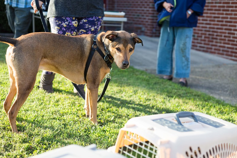 Blessing of the animals 10-3-2017 (35).jpg