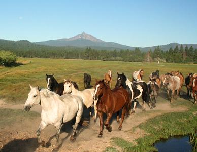 BBR horses IMG_5968_ktk_s.jpg