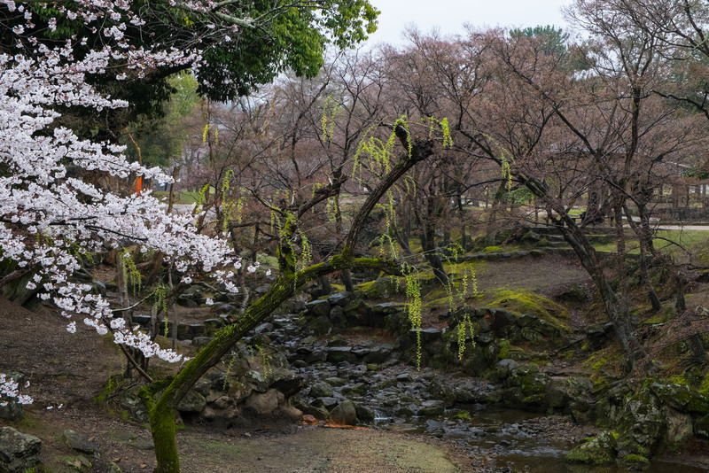 Nara Day 5 (330 of 374).jpg