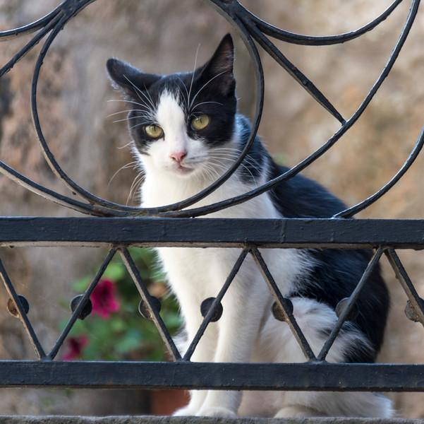 Bagnoregio_Cat-1.jpg