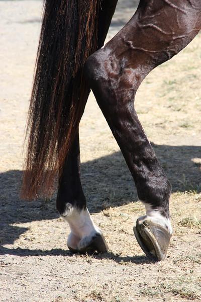 Horse resting his foot.