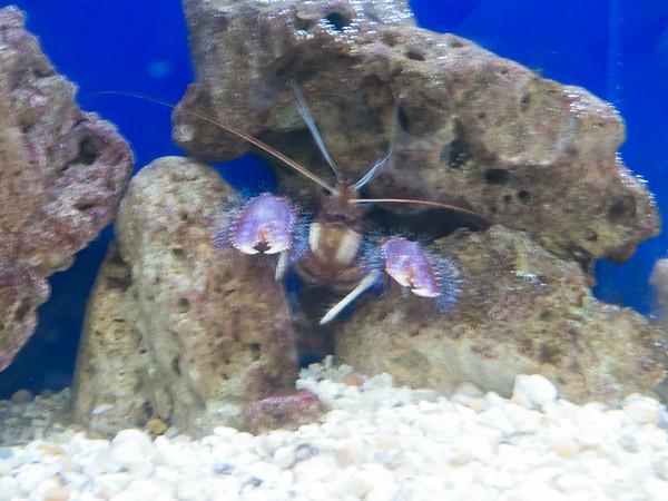 Aquarium 08-2014