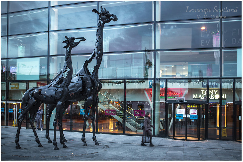 Giraffe sculpture outside the Omni Centre, Greenside Place (1)