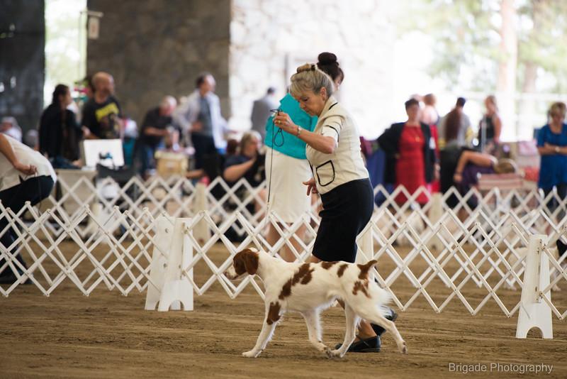 Winners Dog Jaxson